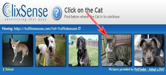 Click On The Cat
